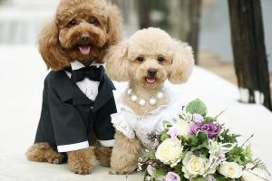 dog-sitter-wedding-planner-caserta-napoli-norma-weeding